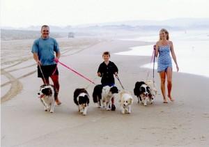 Responsible dog walking
