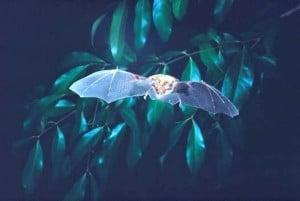 tiny-bat