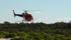bitou-bush-spraying-worimi-conservation-lands-npws
